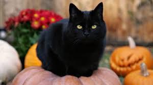 gatto nero zucca